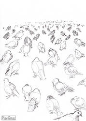 Pigeon sketches (2/3) by PlaviGmaz