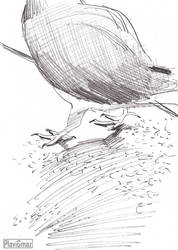 Pigeon sketches (3/3)