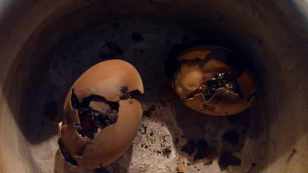 Egg boil fail