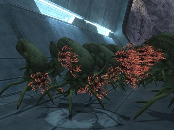 FLOOD INFECTION FORM IN HALO 3 by victortky on DeviantArt