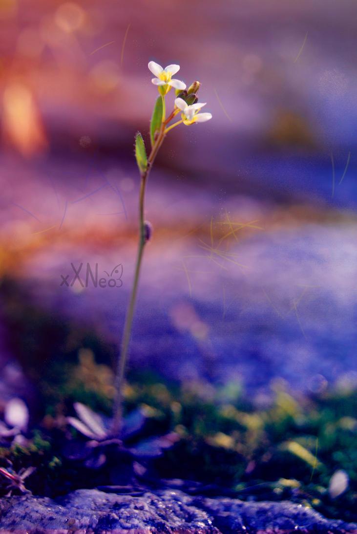 mini beauty by xXNeo