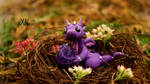 waiting baby dragon
