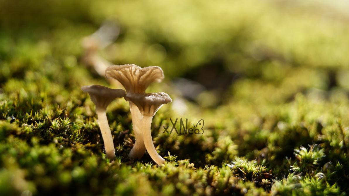 tiny Fungi by xXNeo