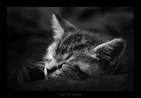Out Like a Kitten - Vectorized by maverick3x6