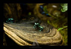 Dart Frogs II by maverick3x6
