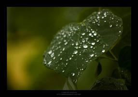 Waterproof by maverick3x6