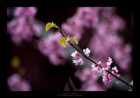 Budding Flowers by maverick3x6
