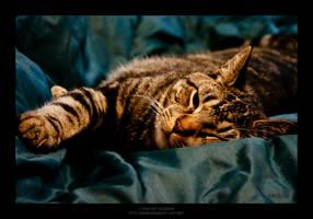 High Contrast Cat by maverick3x6