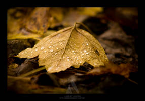 Leaf Pile by maverick3x6