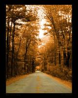 Wolf Island Road by maverick3x6