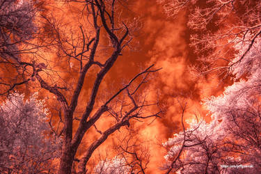 A whole new spectrum of light (infrared) by maverick3x6