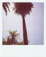 Echo Park Palms by margotdent