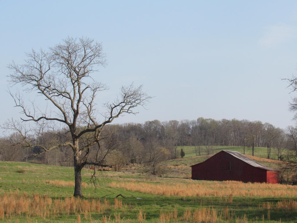 Red Barn with Tree by noellewis