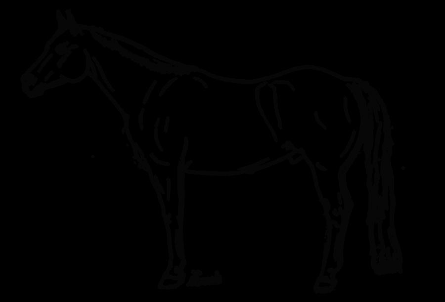 Quarter Horse Lineart by iEvent on DeviantArt