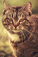 Vintage Cat by TheGraeSheep