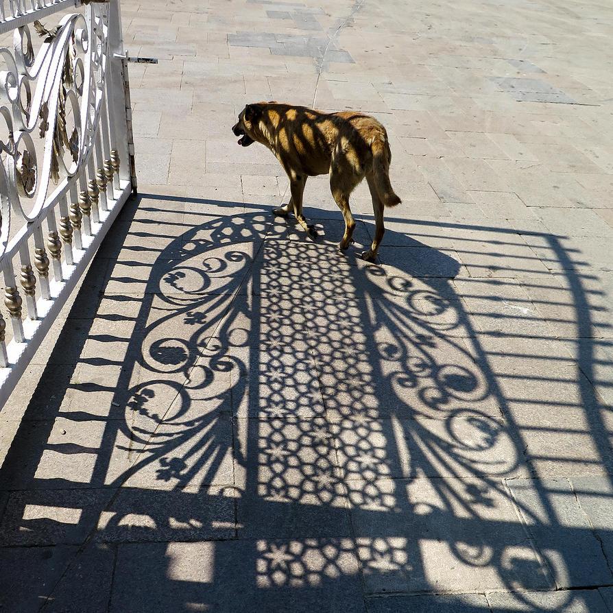 Dog at the Gate by tahirlazim