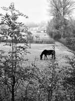 A Rural Scape by tahirlazim