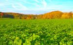 Colorful Autumn in the Valkenburg Valley, Limburg