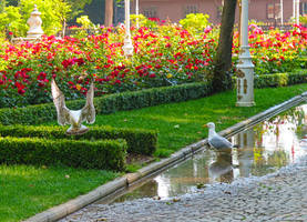 In the Park by tahirlazim