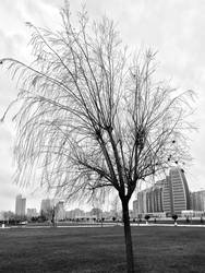 A Tree in the City by tahirlazim