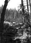 Sudeten Forest. Poland