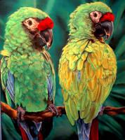 Green Macaws