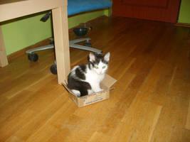 I haz a box!