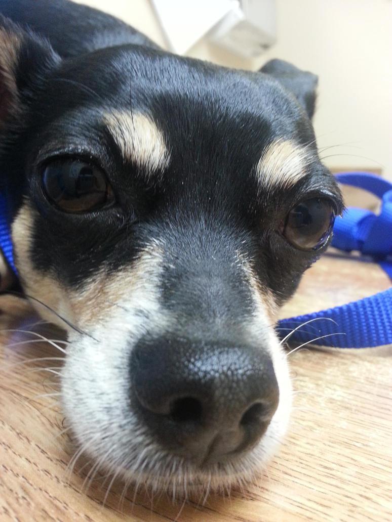 tonka dog, the sad face by therosemuse