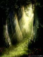 Mystical forest by PatriciaLira