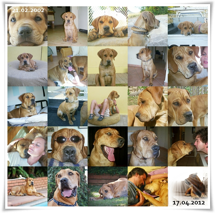 21 February 2002  -  17 April 2012 by Smile4daBirdy