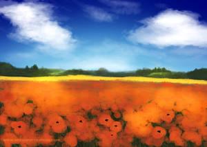 05 Poppy Field