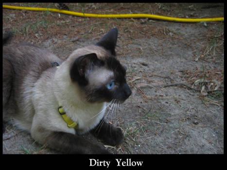Dirty Yellow