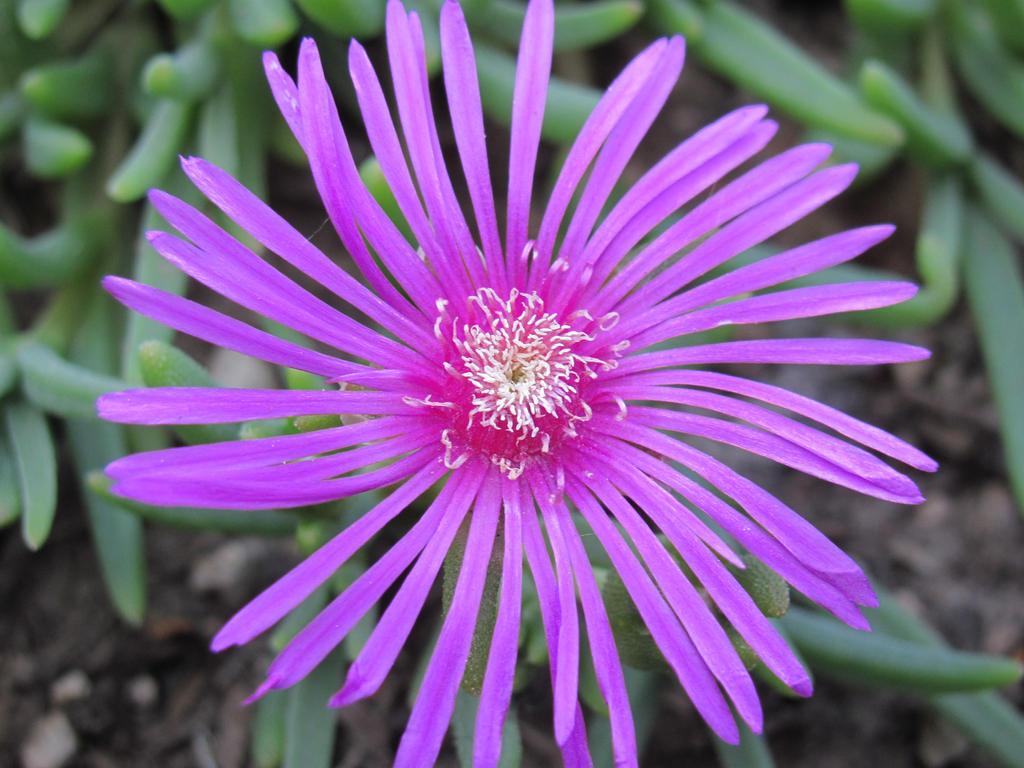 Purple Flower by revenge-of-nerd-girl