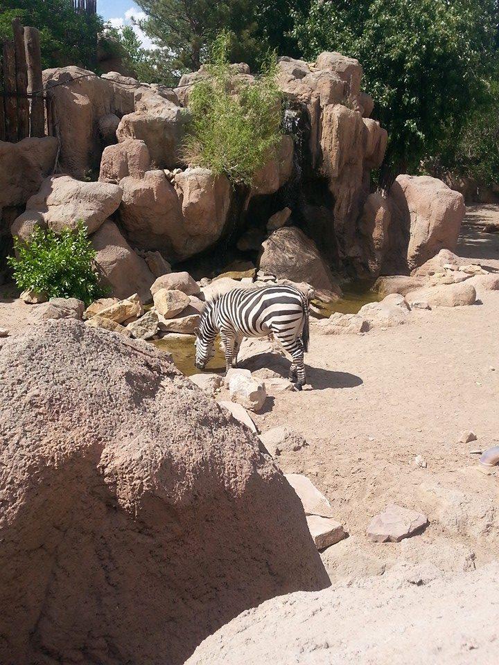 Zebra by revenge-of-nerd-girl