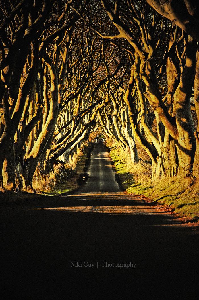 Northern Ireland's Dark Hedges by nik89