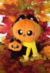 OC: Pumpkin Kitty