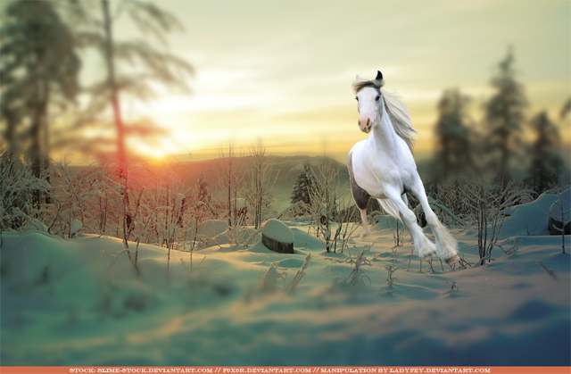 [Image: winter_snow_by_ladyfey-d5g626q.png]