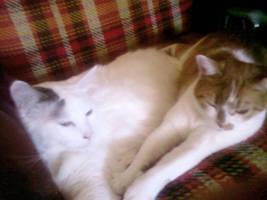 Sam and Envy sleeping together by jaimehlers