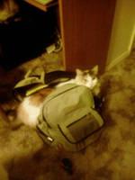 Kitten in my bookbag by jaimehlers