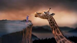 Kid feeding a giraffe