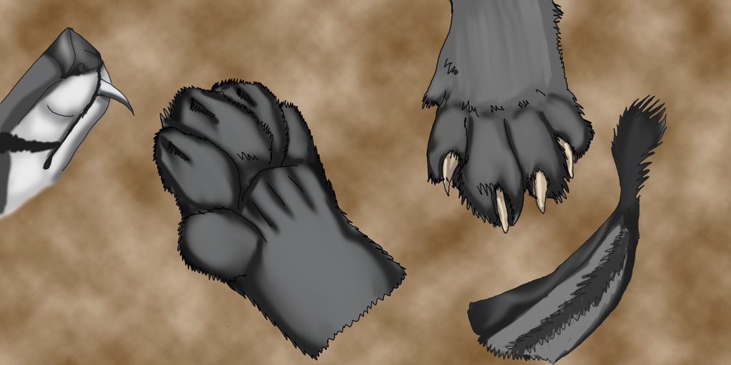 Sionnach paw, ear and muzzle study by lighteningfox