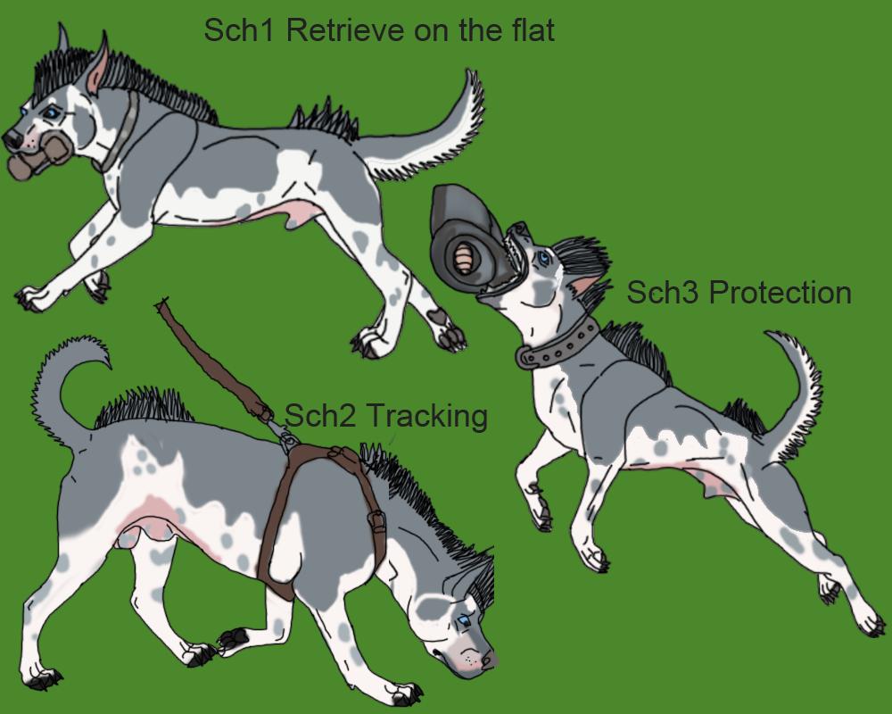 Diego Schutzhund Titles by lighteningfox