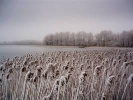 Winter by Dinarakey