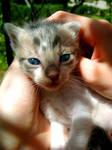 Blue eyed little angel