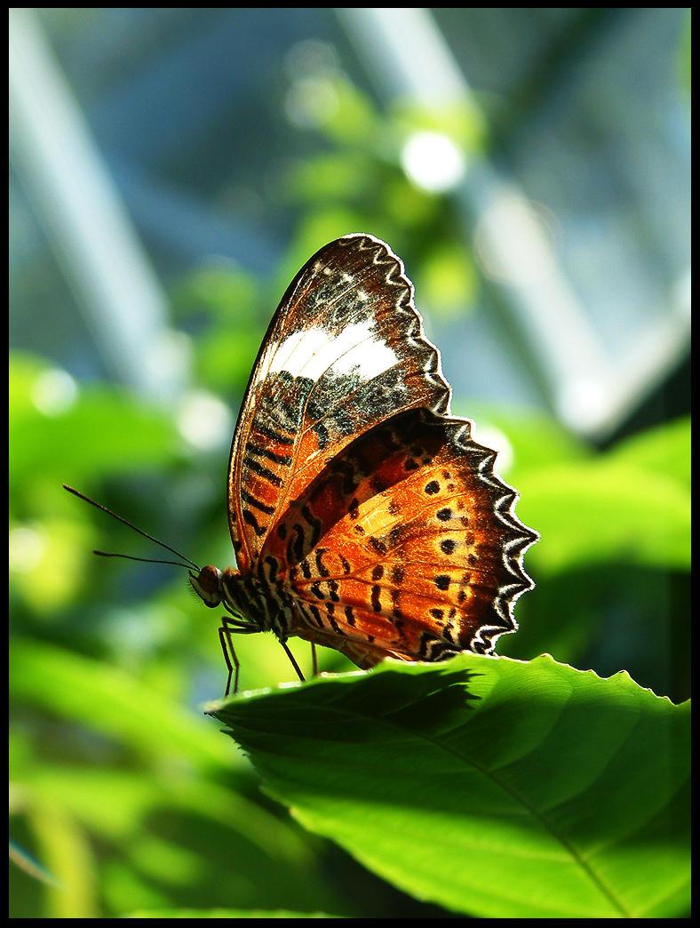 Macro - Butterfly - 1 by disguy2k
