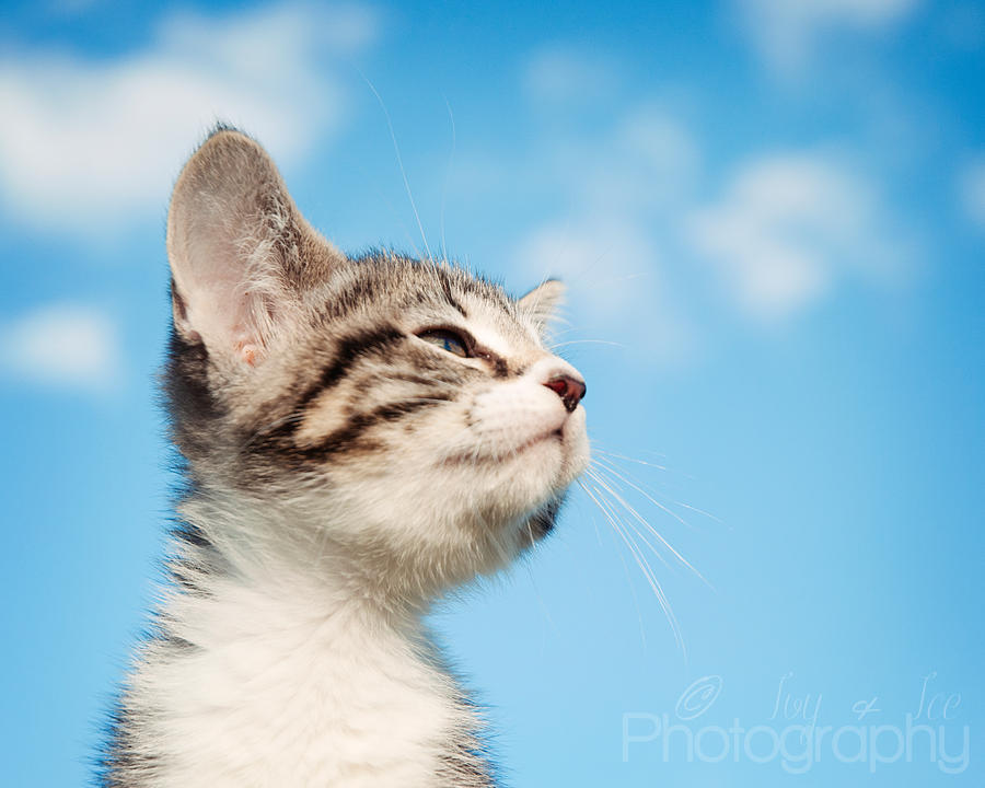 Kitty In the Clouds by MythologicalWonders