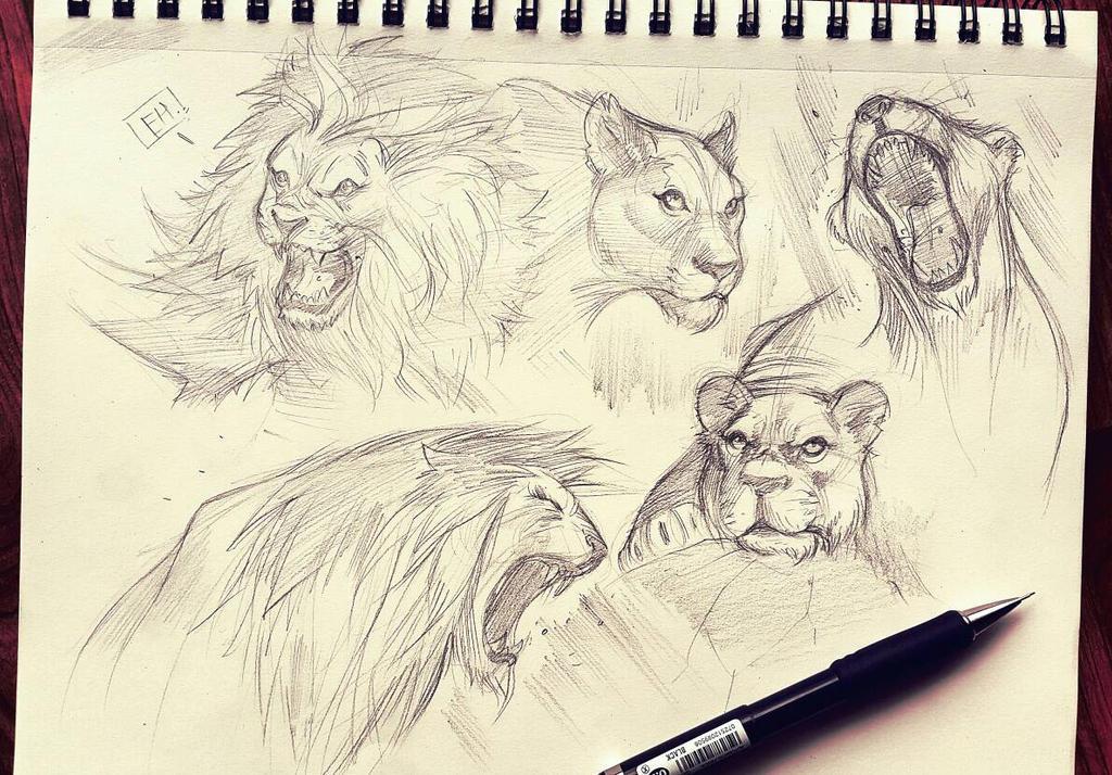 Lion Skretches