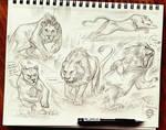Lion Sketches 2