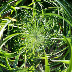 Tiny Grass Planet by thealchemistchamber
