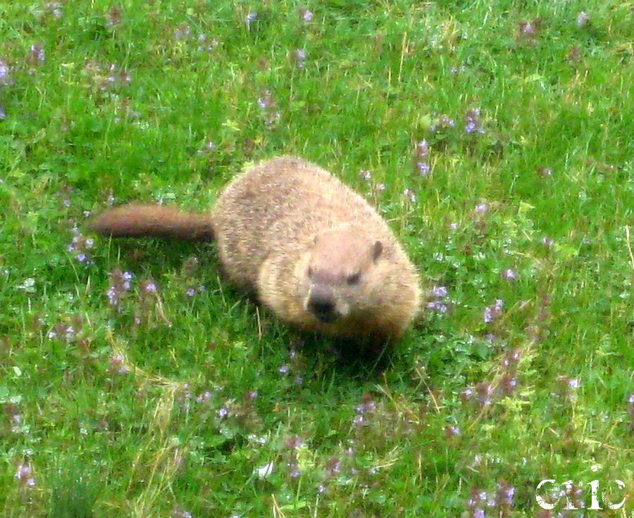 Groundhog Day By XxEricsInfernoxx On DeviantArt